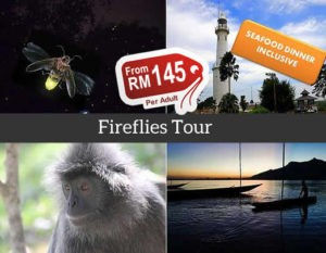 Fireflies Tour Kuala Selangor